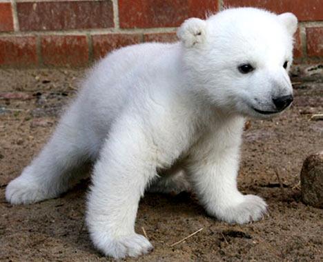 polarbearkurt.jpg