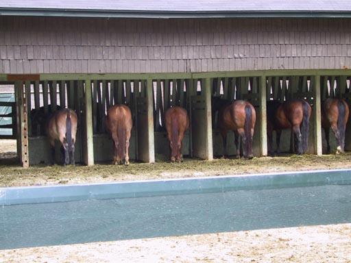 horsesasses