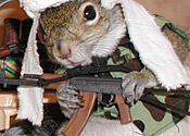 squirrel-terrorist