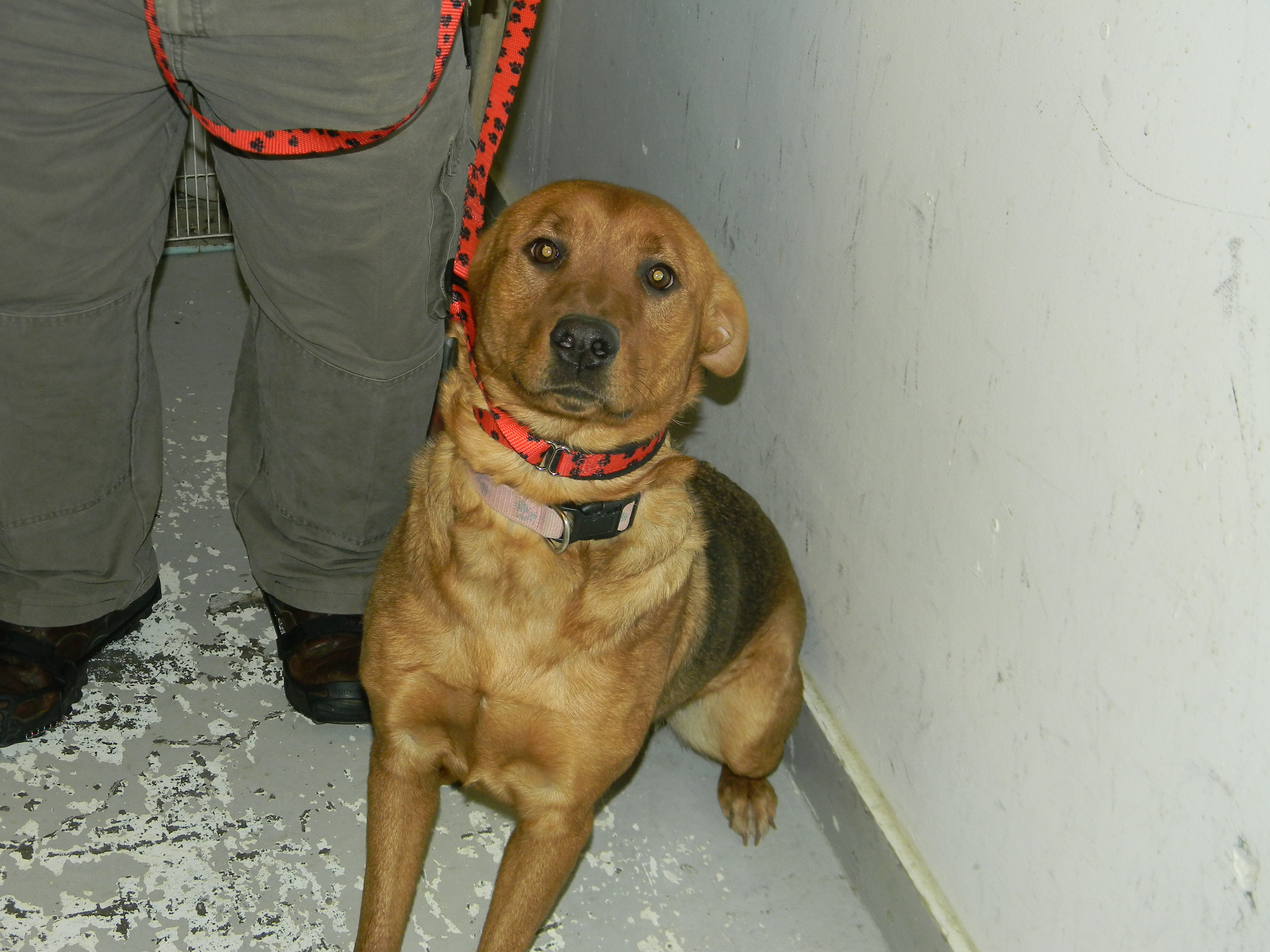 dog society dating Search for adoptable pets at shelters and rescues, and adopt your new dogs.