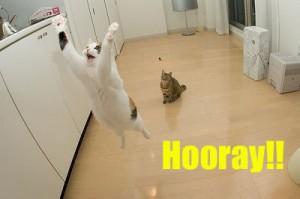 hooray-300x199