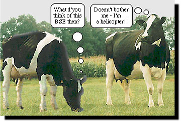 Funny cow jokes - photo#19